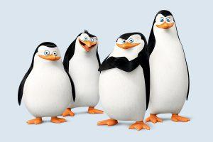 آشنایی با الگوریتم پنگوئن گوگل | آیا میدانستید که گوگل هم پنگوئن دارد؟ | رشدانا