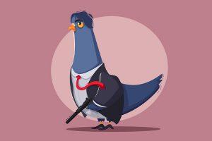 بررسی الگوریتم کبوتر گوگل و تاثیرات آن بر سئو محلی | رشدانا